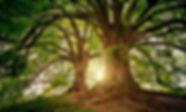 amazing tree.jpg