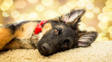 Miska at 5 months | Loveland, CO Pet Photographer