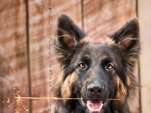 Miska | Fort Collins, CO Pet Photography