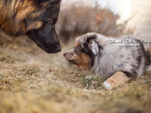 Zelda | Fort Collins, CO Pet Photography