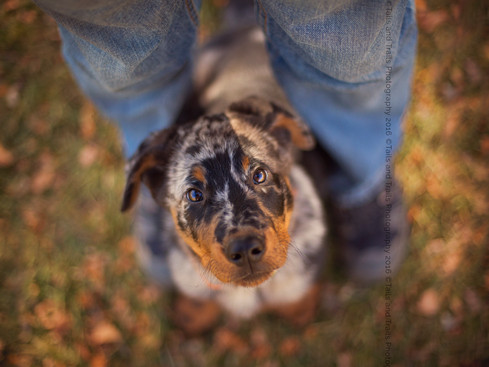 Porthos | Fort Collins, CO Pet Photography