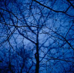 Blue Tree #2