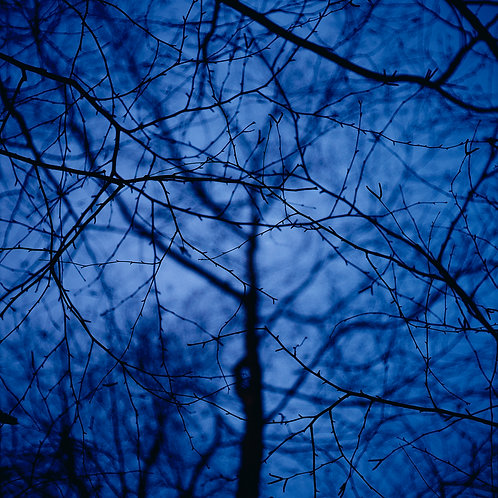 Blue Tree #2 by James Cooper
