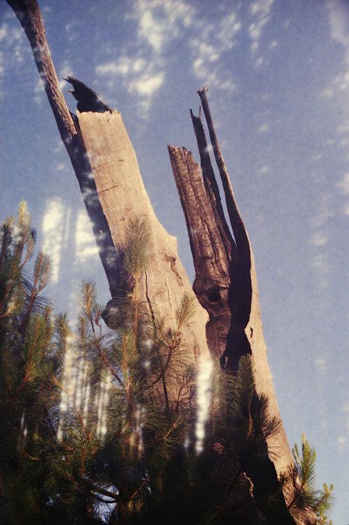 Yosemite I by Hanna Quevedo