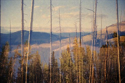 Yellowstone I by Hanna Quevedo