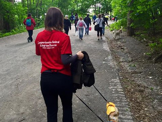ON MARCHE CONTRE LA CRUAUTÉ ANIMALE ! LET'S HIT THE PAVEMENT AND STOP ANIMAL CRUELTY!