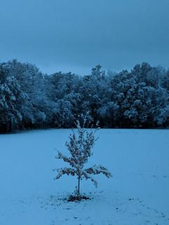 """""""Snowy Night"""" Sam Yung"""
