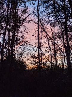 """Sunset Silhouette"" Sam Yung"