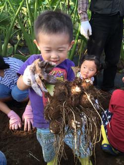 芋掘りツアー