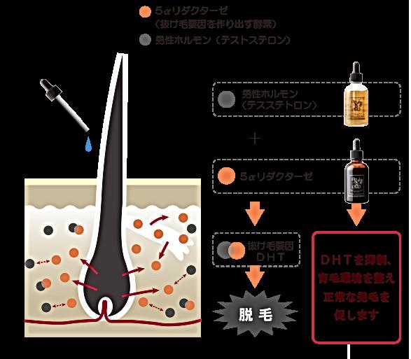 DHTを抑制、育毛環境を整える