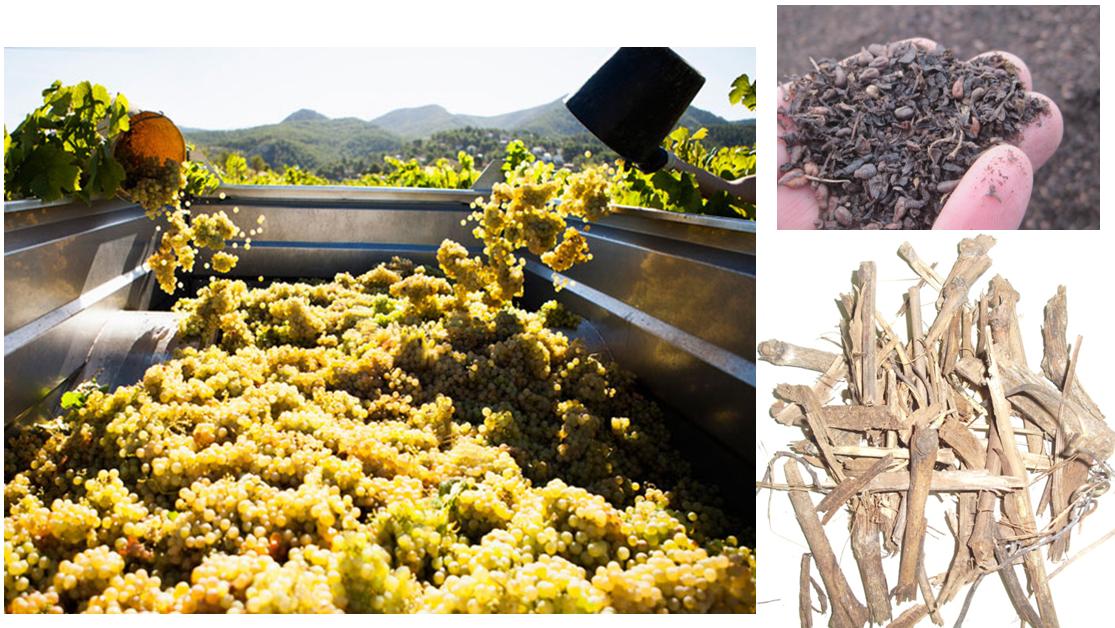 La poda del viñedo: Biomasa