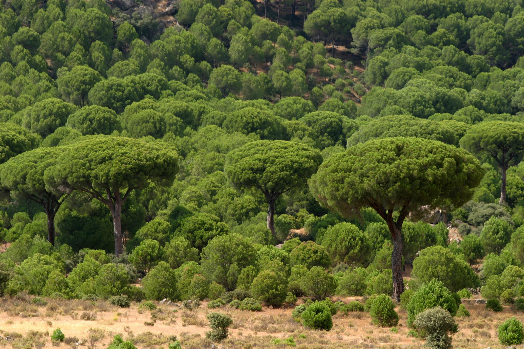 Nuestros bosques: pulmón y energía