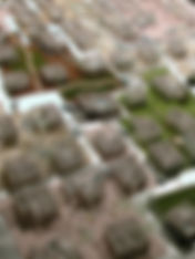 コンペみち2003.jpg