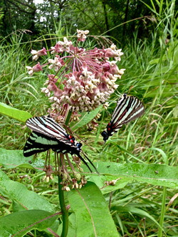 the pollinators.