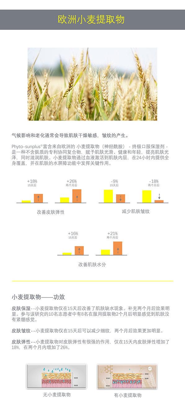Phyto-Sunplus Chinese 17.jpg