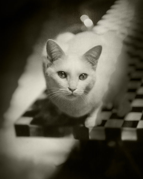 Portrait of White Cat Final_1.jpg