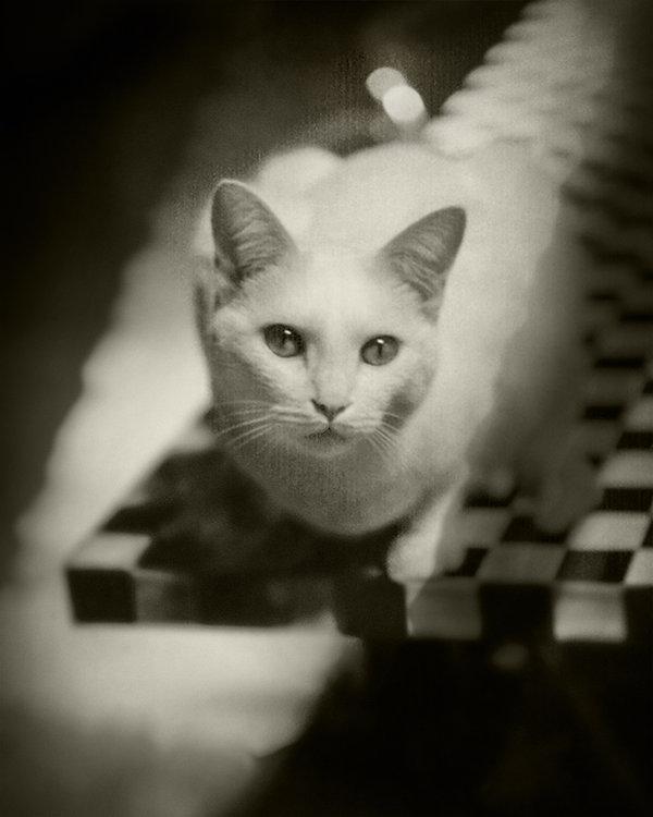 Portrait of White Cat Final_1.jpg