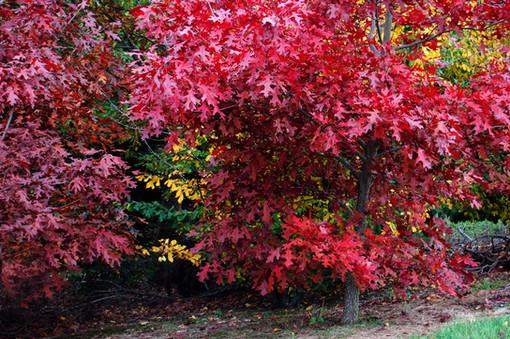 Autumn, New Zealand