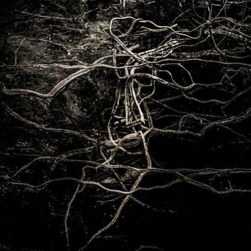 Roots Entwined