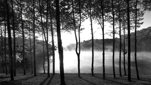 Afternoon Mist on Lake