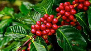 When it Comes to Coffee, Sustainable means Cool