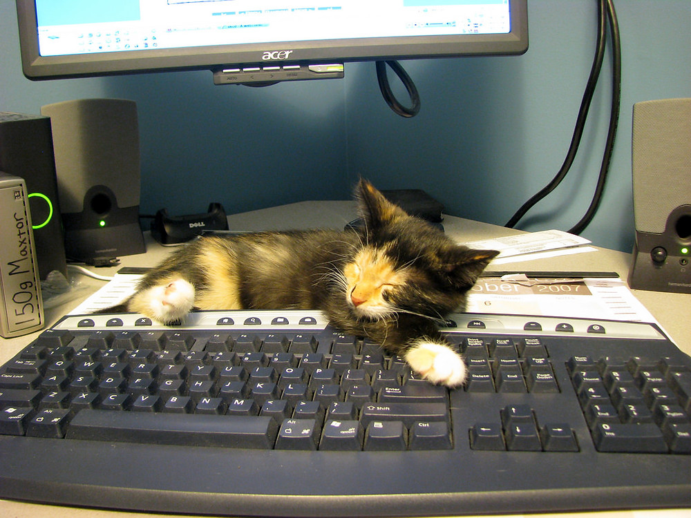 Cat Sleeping on Keyboard