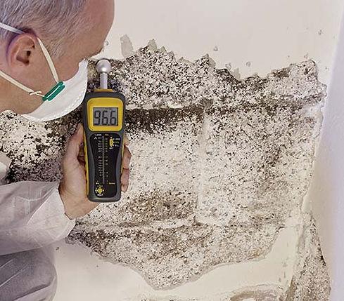 TÜV-zertifizierte Schimmelsanierung und Sanierungsarbeiten durch TSI Immobilien Leipzig