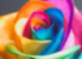 ROSE colorful.jpg