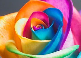 ROSE colorful.jpg