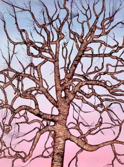 Council Creek Oak Tree (winter)