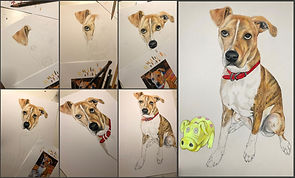 Rana Example dog watercolor colored penc
