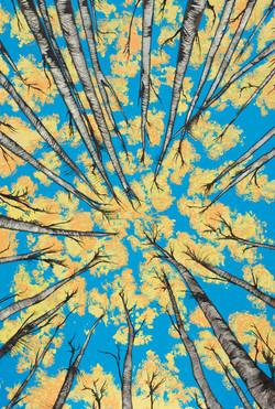 Yellow Tree Tops