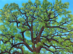 Council Creek Oak (Summer Version)
