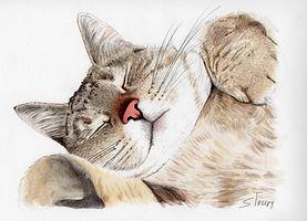 claires cat w signature.jpg