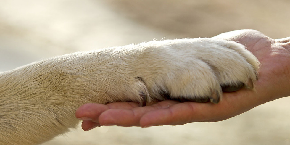 Pet Loss and Bereavement Support Advisor