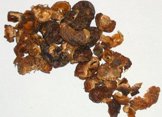 Nozes de Saponária - Midzu