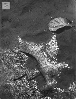 Últimos vestígios (c.1950)