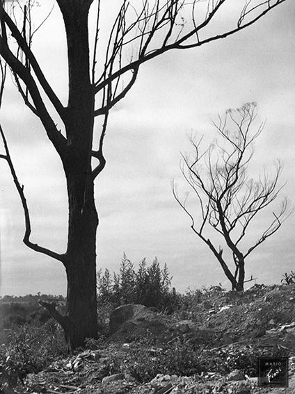 Clamor (c.1960)