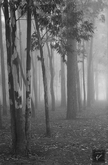 Neblina (c.1960)
