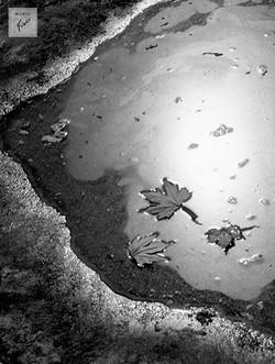Quando as folhas caem (c.1960)