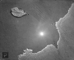 Ao léo (1952)