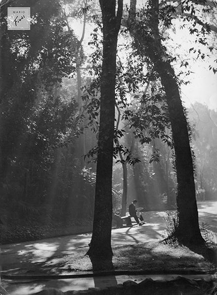 Leitor de jardim (1950)
