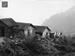 Favela (c.1950)