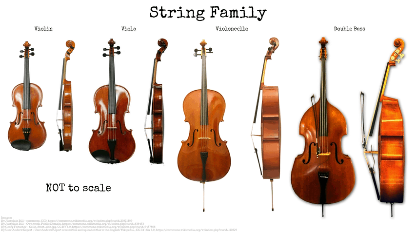 String Family .png