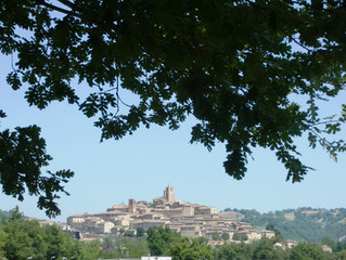 Italian Marche region olive oils