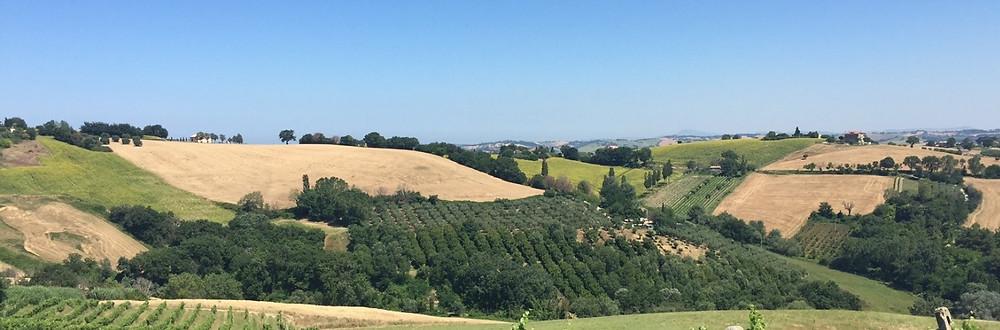 Marche hillside
