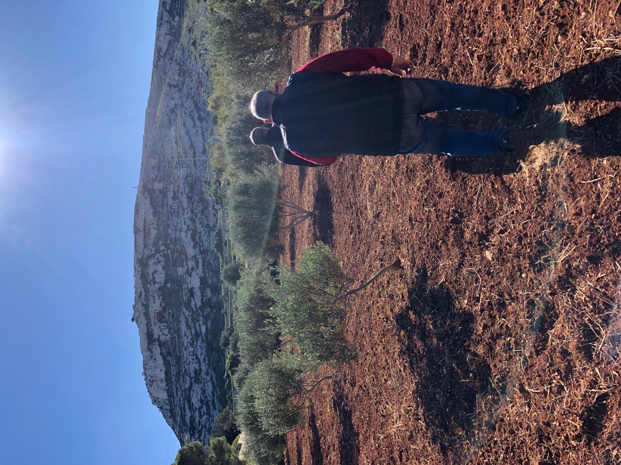 Bidni olive grove