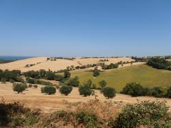 Le Marche Hillside