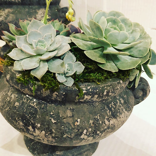 Succulents in Urns