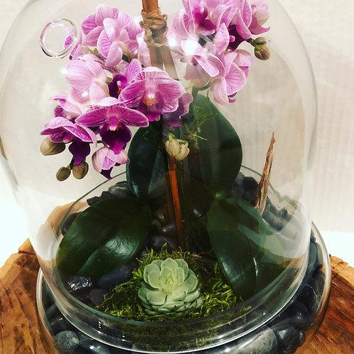 Mini Orchids gardens